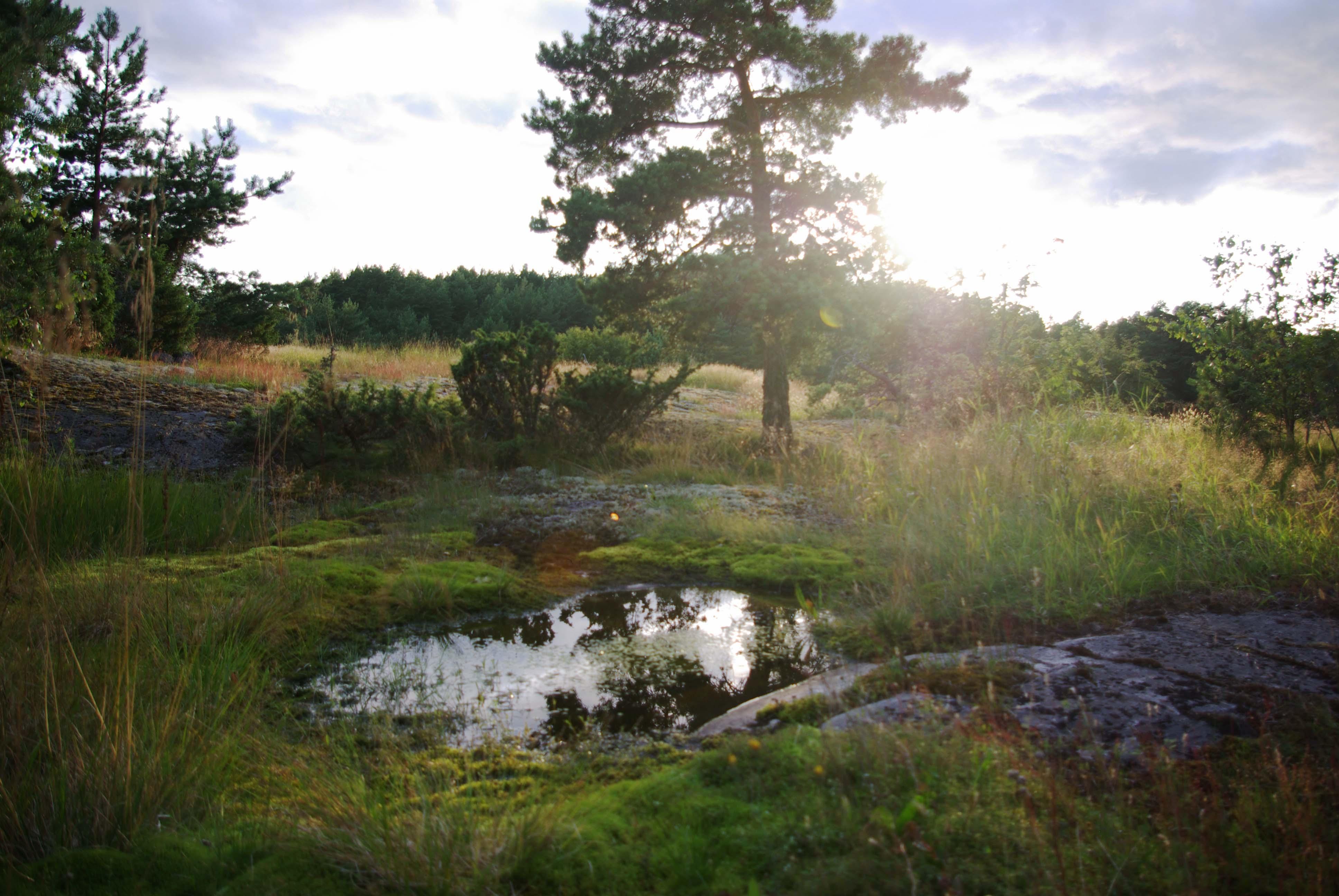 Maisema, kuva Milla Aalto