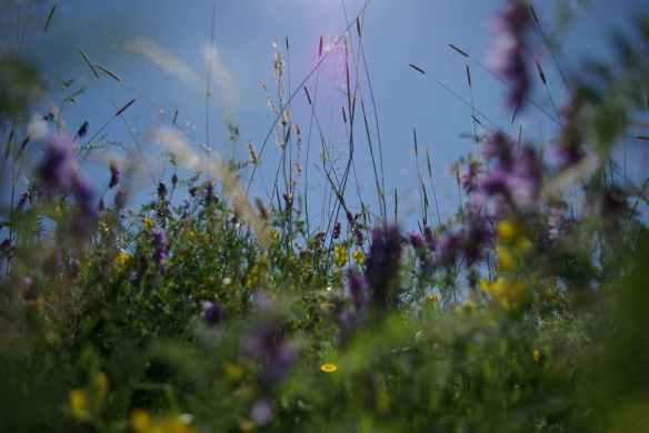 Säätiön metsäpalsta, kuva Milla Aalto
