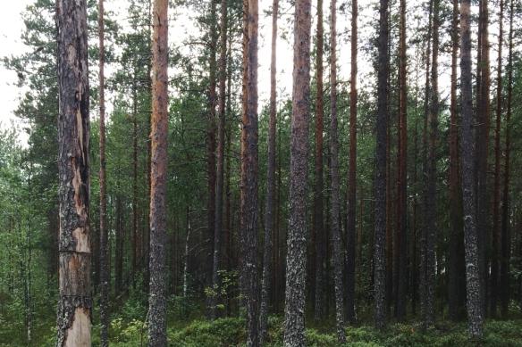 Kivisuo-1.-Kuvaaja-Tarja-Ketola.